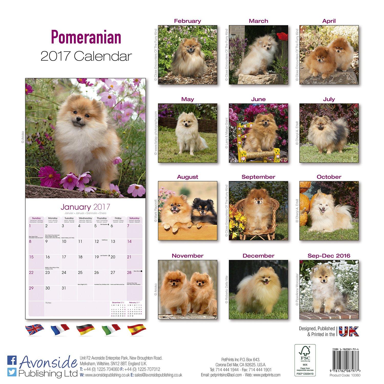 Pomeranian calendar 2017 dog breed calendars 2016 2017 wall pomeranian calendar 2017 dog breed calendars 2016 2017 wall calendars 16 month by avonside megacalendars 9781782087977 amazon books nvjuhfo Images