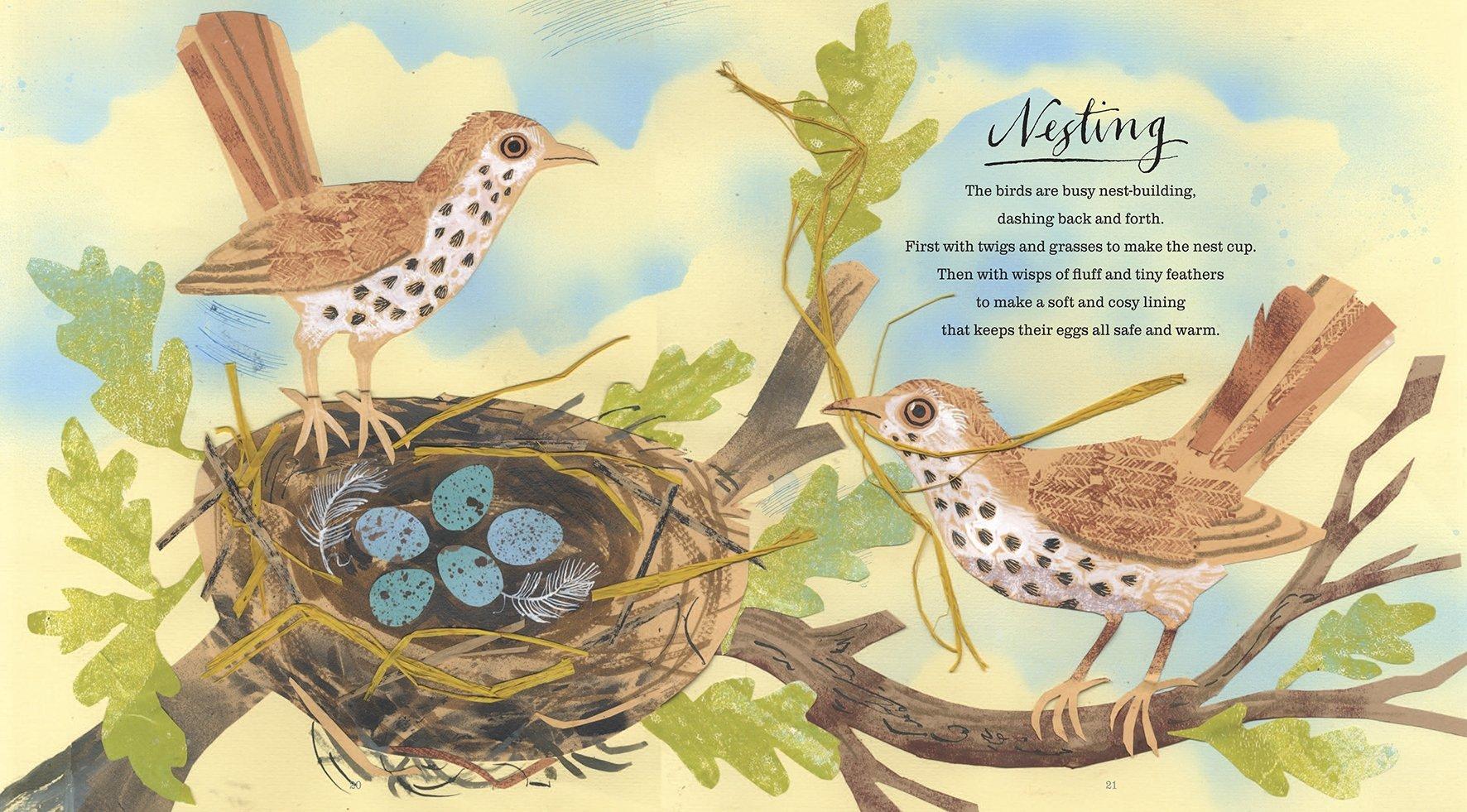 A First Book of Nature: Amazon.co.uk: Nicola Davies, Mark Hearld ...
