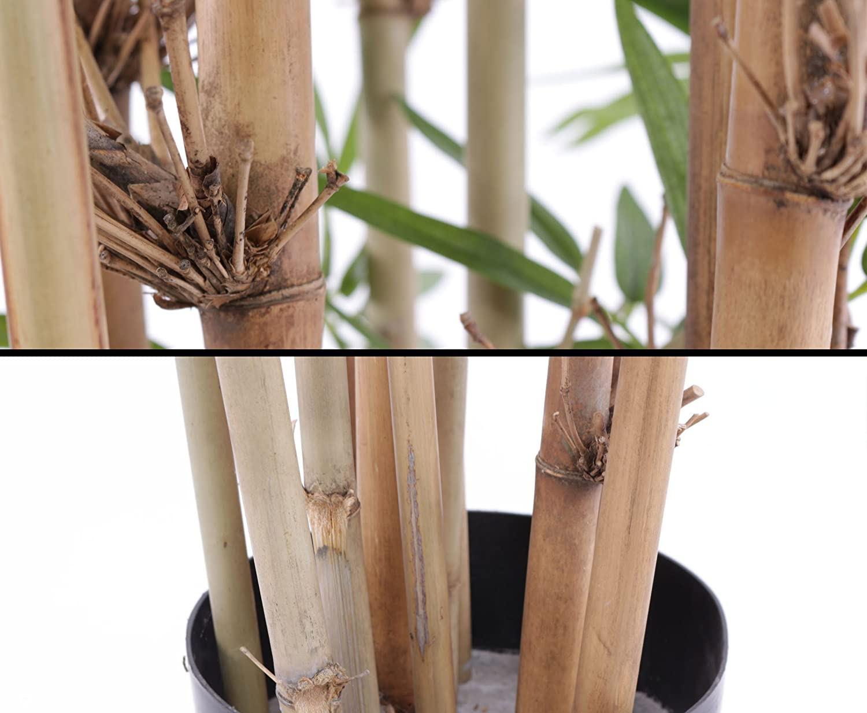 Kunstpflanzen Discount amazon de künstliche bambuspflanze uv geschützt und schwer