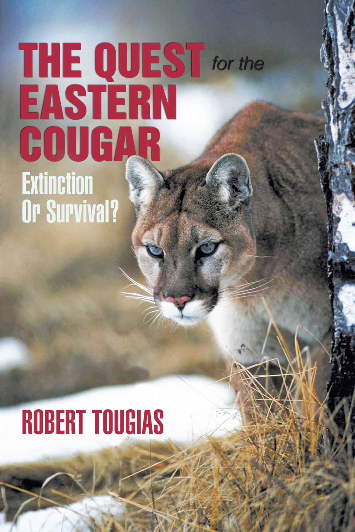 Image result for quest for the eastern cougar