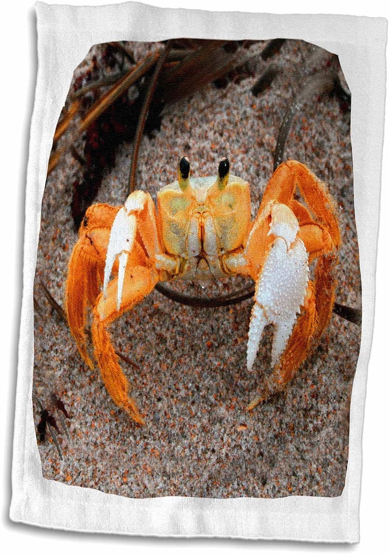 Amazon Com 3d Rose Fiddler Crab On Beach Colorized Orange Towel 15 X 22 Multicolor Home Kitchen