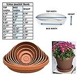 "Bloem Terra Plant Saucer Tray 9"" Living Green"