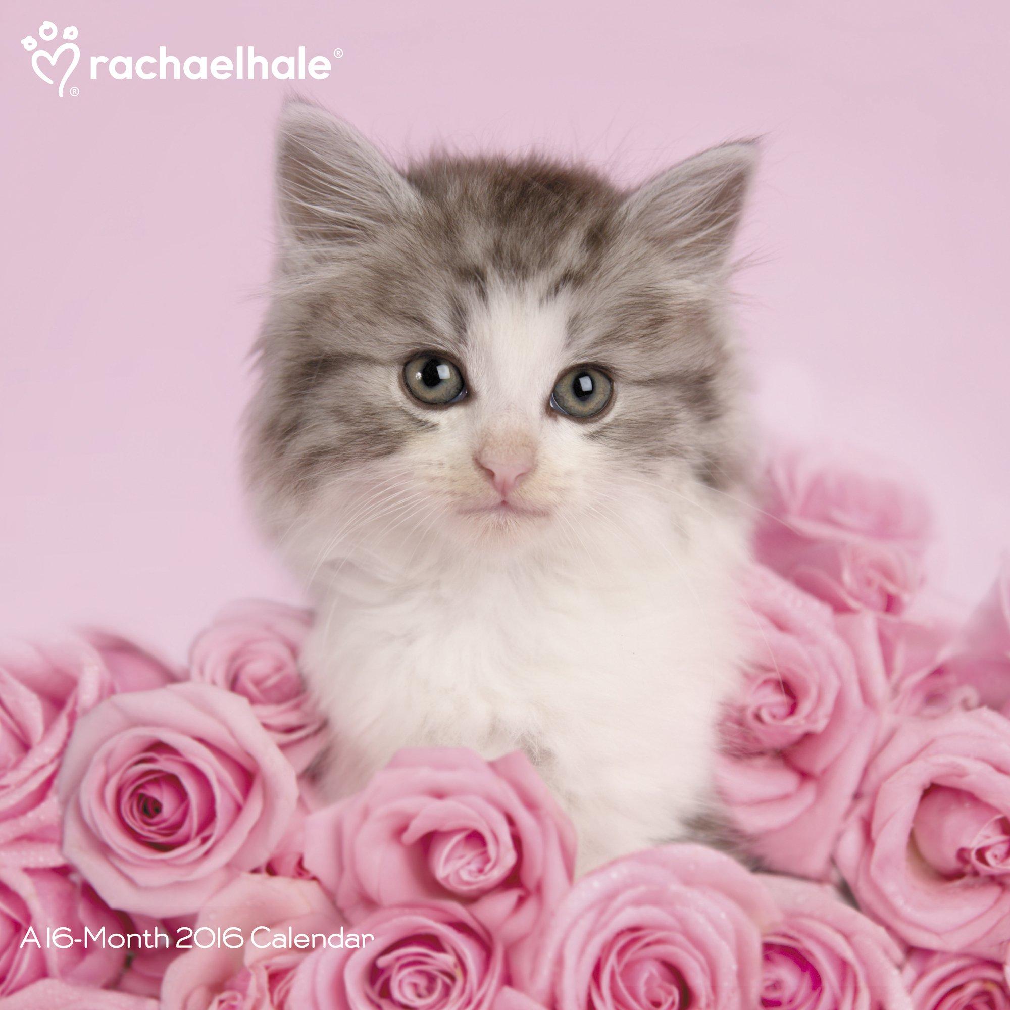 rachael hale naptár Rachael Hale Cats Wall Calendar (2016): Day Dream: 9781629051901  rachael hale naptár