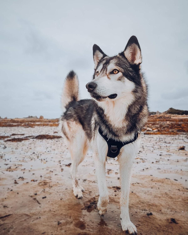 Embark Pets Arnés para Mascotas Grande (79-104 cm, Negro): Amazon ...