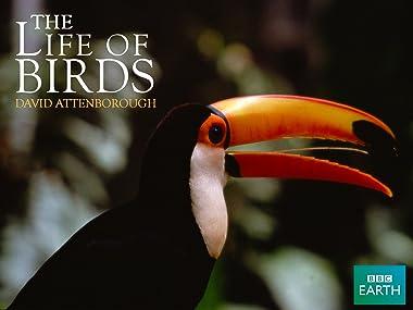 Amazon com: Watch Life of Birds   Prime Video