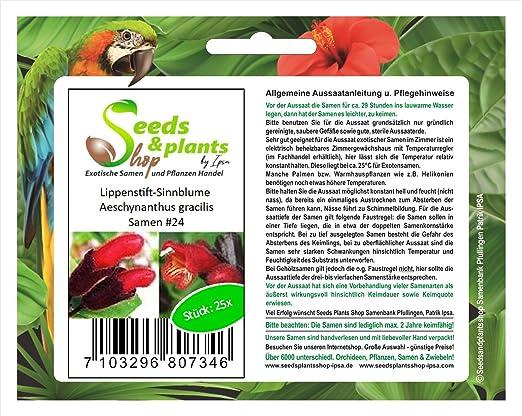 25 flor de significado de barra de labios de Aeschynanthus ...