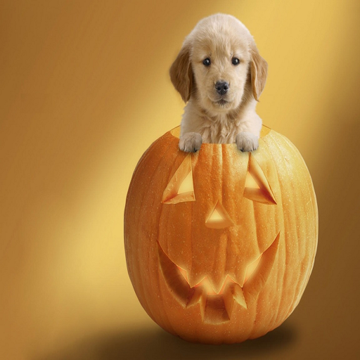 Halloween Baby Dog Live (Halloween Gifs)