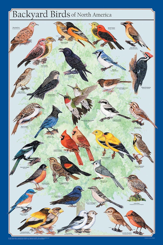 north american backyard birds home design