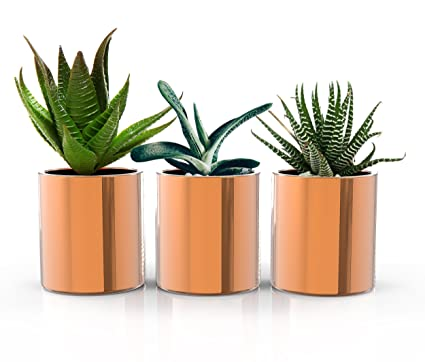 STRATFIELD HOME DESIGN Copper Succulent Plant Pots   Premium Set Of 3 Mini  Indoor Planters