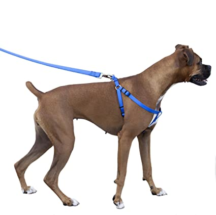 Amazon.com : Majestic Pet Dog Harness-Best No Pull Harness for All