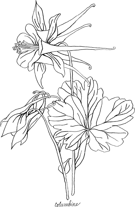 Featured on Cream with Cadmium Orange Accent Set of 6 Botanical Flower Art Poster Unframed Art Prints A1 Minimalist Wild Flower Sketch