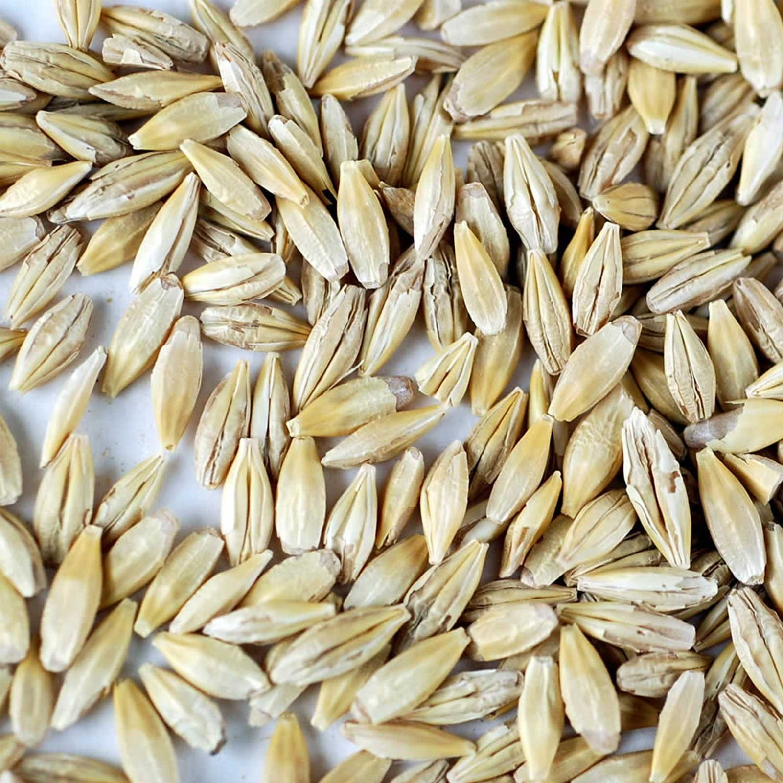 Organic Barley Seeds - 30 Lbs - Whole (Hull Intact) Barleygrass Seed - Ornamental Barley Grass, Juicing - Grain for Beer Making, Emergency Food Storage & More by Handy Pantry (Image #2)