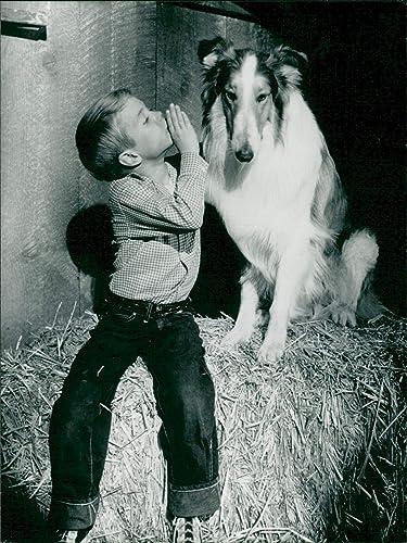 Amazon com: Vintage photo of Dog: Lassie w/American Child