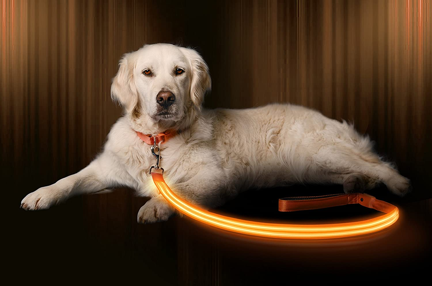 Illuminating Leash