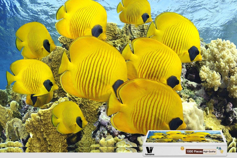 【人気No.1】 PigBangbang,70cm Piece X 50cm,Hard Wooden - in Box Famous Paintings Bright Bright Colourful - School Of Yellow Fish - 1000 Piece B07DHCJ2DM, 平野区:80604eea --- a0267596.xsph.ru