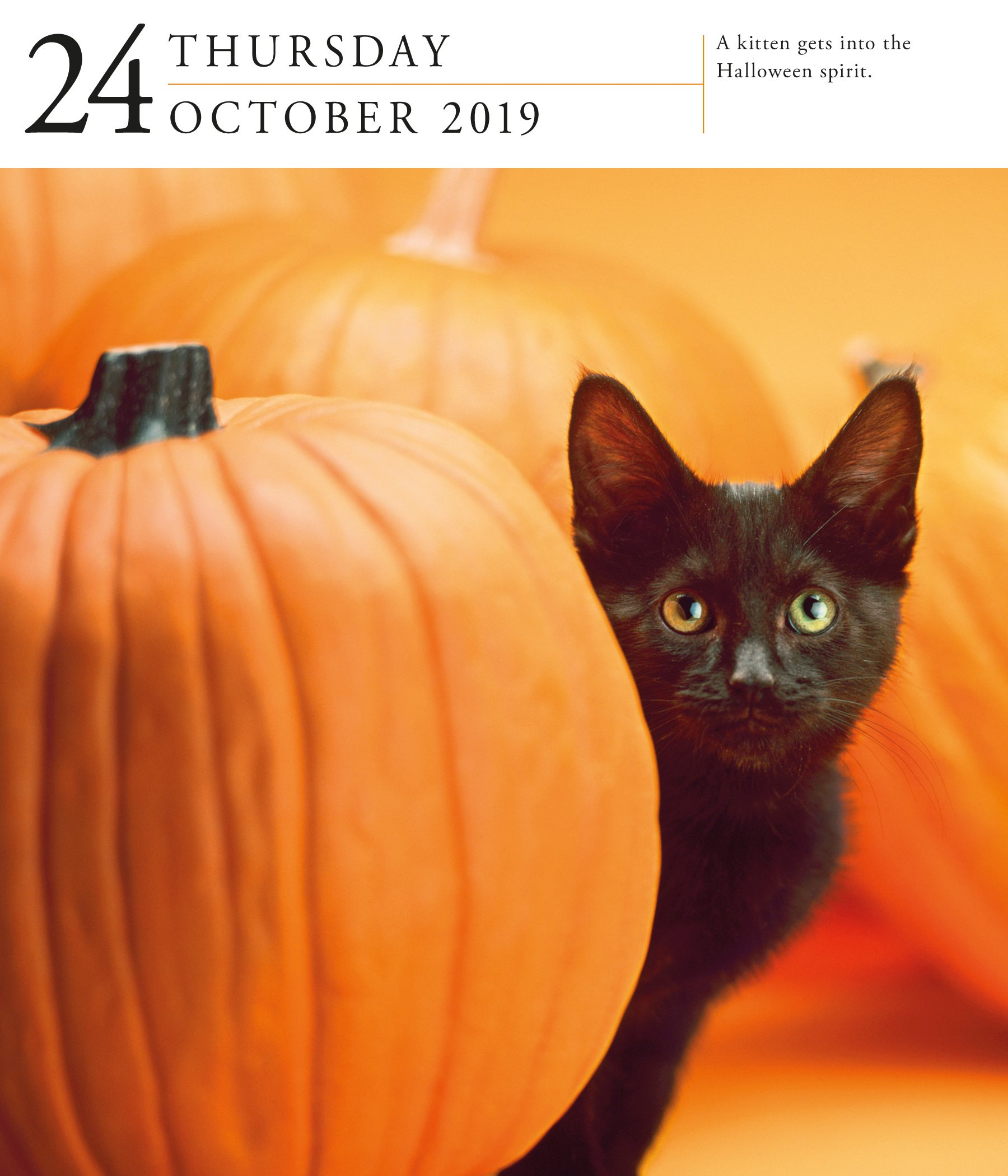 Cat Page-A-Day Gallery Desk Calendar 2019 [6.25'' x 7.25'' Inches] by 2019 Calendars (Image #5)