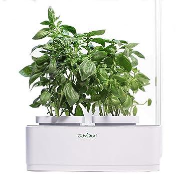 Odyseed Eden Hausgarten Ziehen Sie Ihre Eigenen Aromatischen