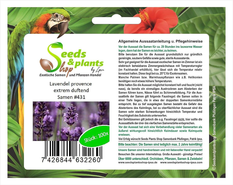 100 extremadamente perfumado lavanda Provenza semillas semillas de la planta del jardín #431: Amazon.es: Jardín