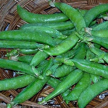 SUPER SUGAR SNAP PEA GARDEN SEEDS HEIRLOOM VEGETABLE GARDENING SEED NON-GMO