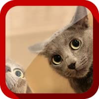 Cute Cats Video
