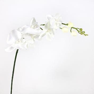 orchidee blanche tissu