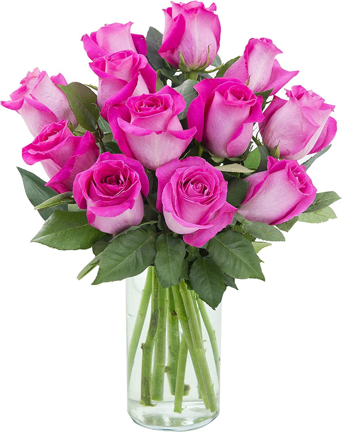 Purchase Now for Delivery by Thursday | Arabella Farm Direct Bouquet of 12 Stems of Fresh Cut Hot Pink Roses in a Free Designer Glass Vase