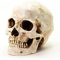 S24.5234 Cráneo humano, calavera, 2 piezas, de tamaño
