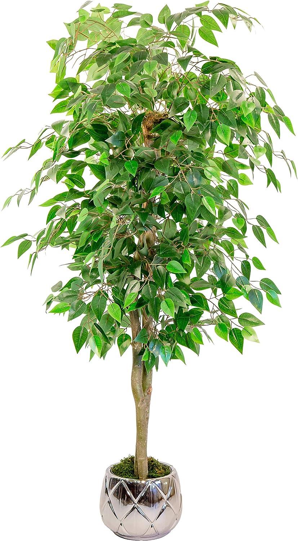 Maia Shop 1225 Ficus Troncos Naturales, Elaborados con los Mejores Materiales, Ideal para Decoración de hogar, Árbol, Planta Artificial (105 cm), Mixtos, 150 cm