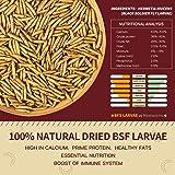 Dried Black Soldier Fly Larvae - 5.5 LBS