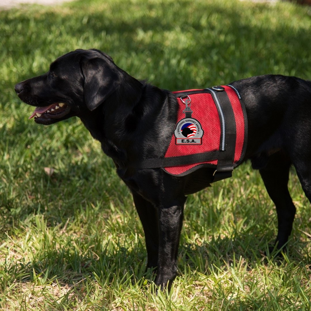 ''Emotional Support Animal ESA'' Clip on Identification Hanging Patch Tag – Clips onto a Service Dog Vest, Harness, Collar, Leash or Carrier by Working Service Dog (Image #4)