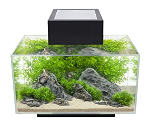 Fluval Edge Aquarium Kit (6-Gallon)