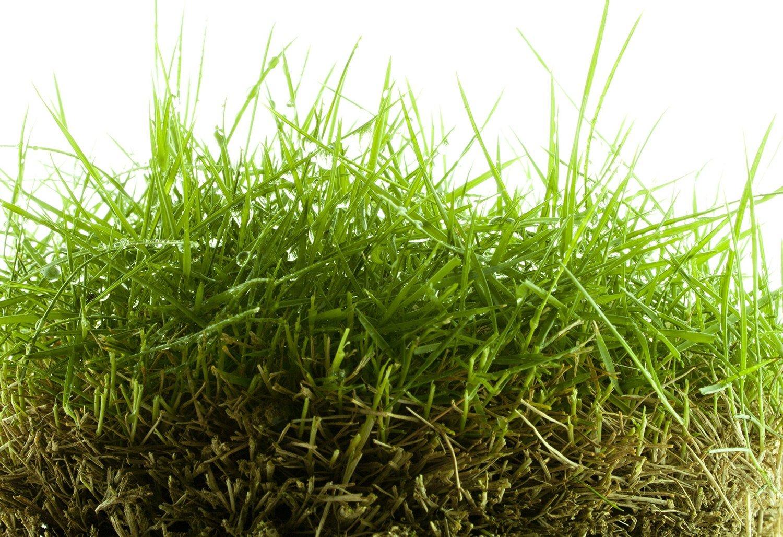 Zoysia Grass Seed (1000 SQFT)