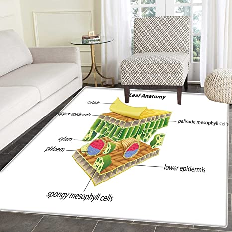 Amazoncom Educational Area Rug Anatomy Of A Leaf Names Of The - Spongy outdoor flooring