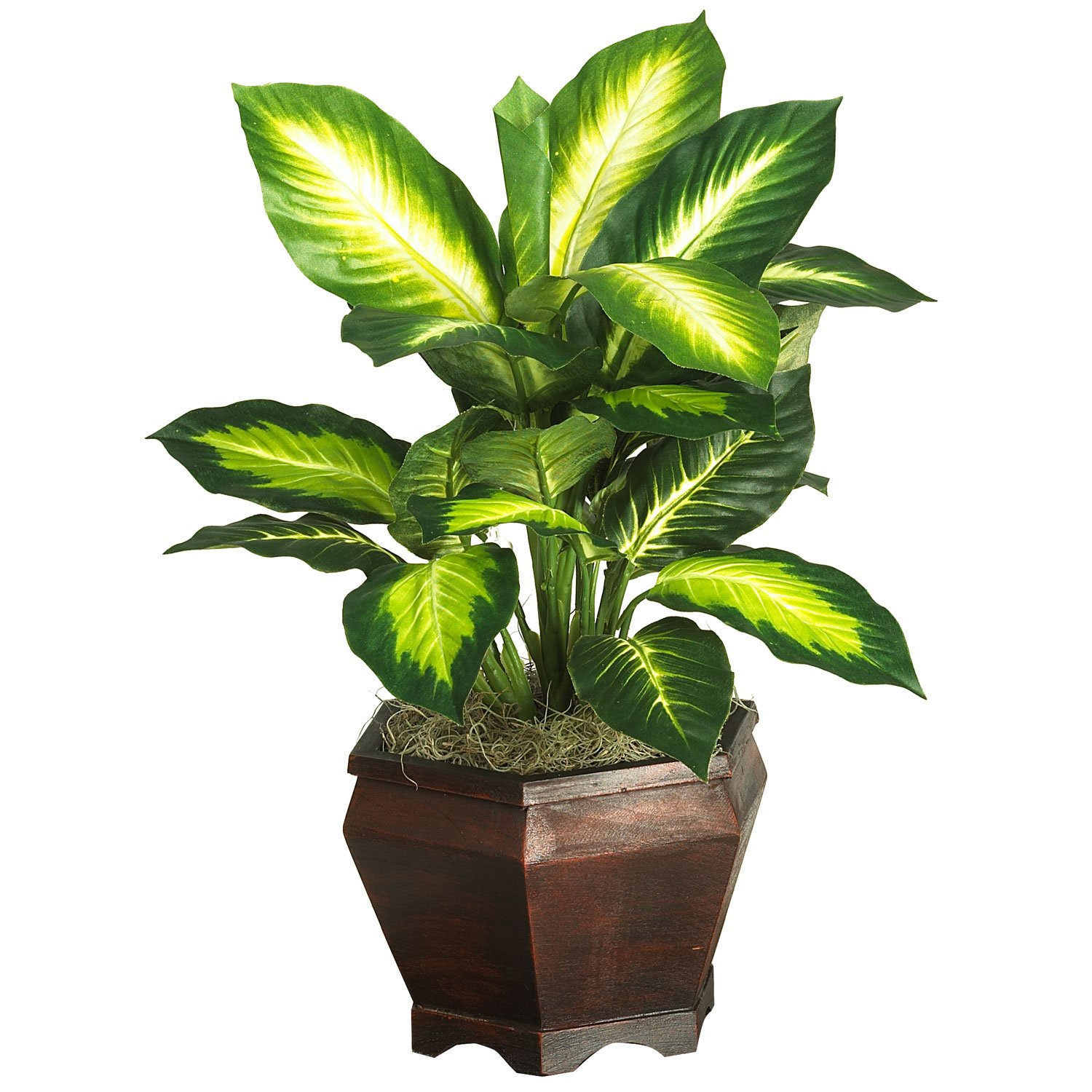 Nearly Natural Golden Dieffenbachia With Wood Vase Silk Plnat Green