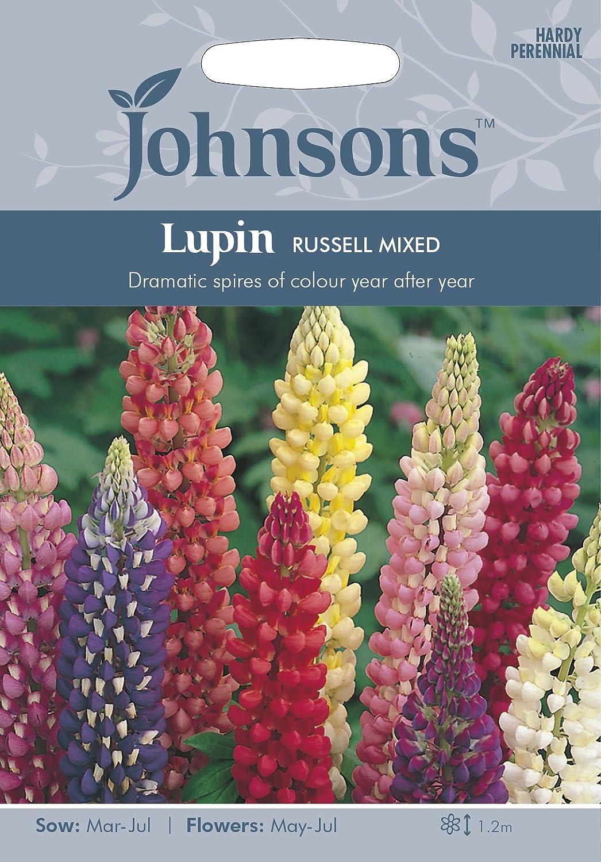 Johnsons UK//JO//FL Lupin Russell Mixed