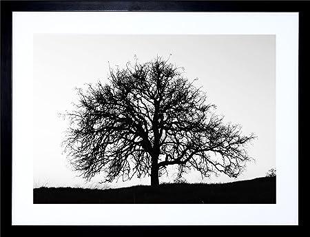 9x7 photo tree silhouette black white cool stark framed art print f97x857