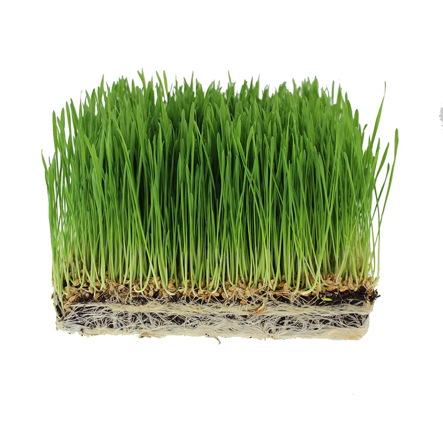 Handy Pantry Organic Wheatgrass Seeds | For Wheat Grass, Cat Grass, Food Storage & More | Hard Red Wheat (1 Pound)