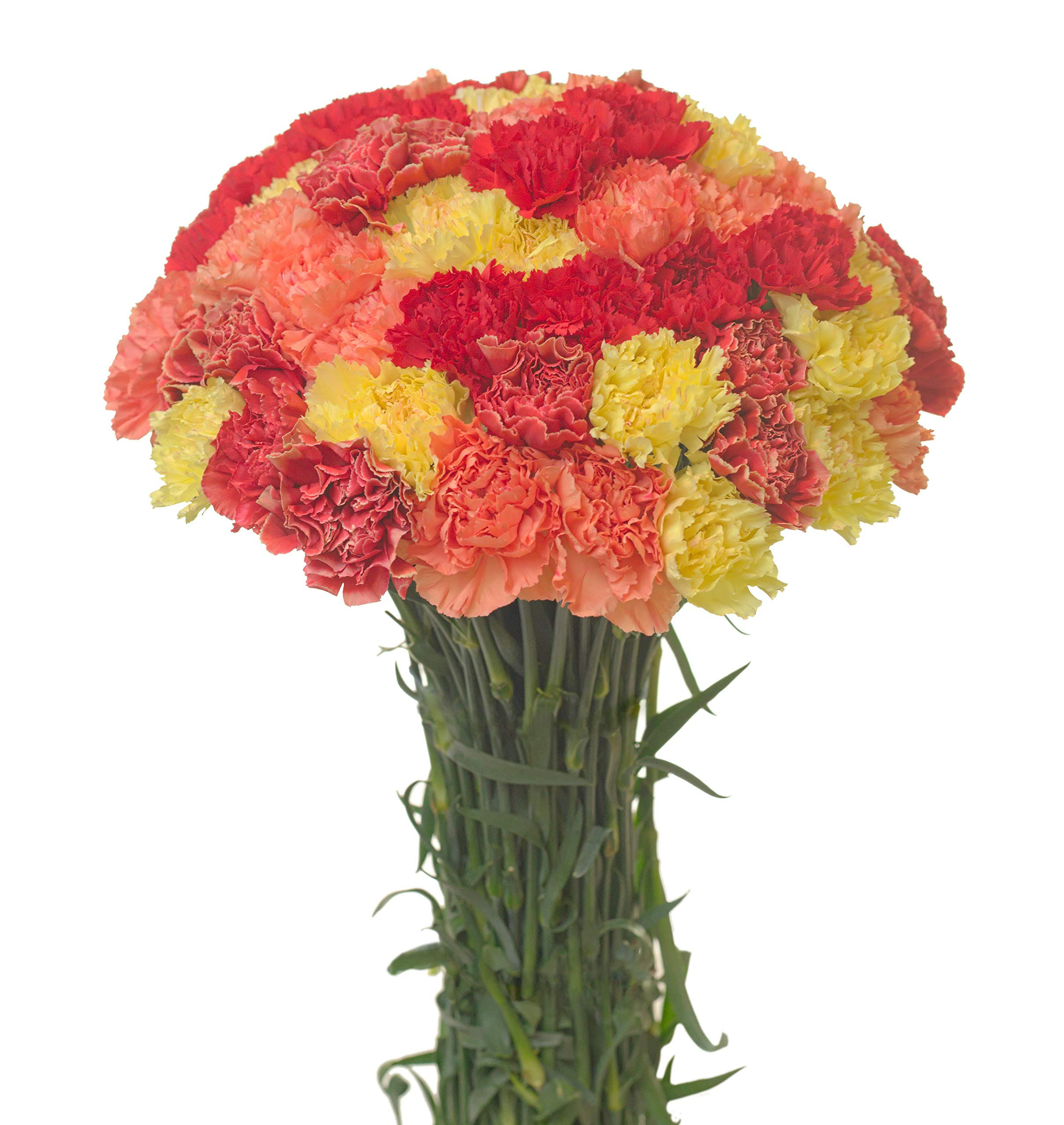 Carnations Special Holidays Pack (75, Fall)