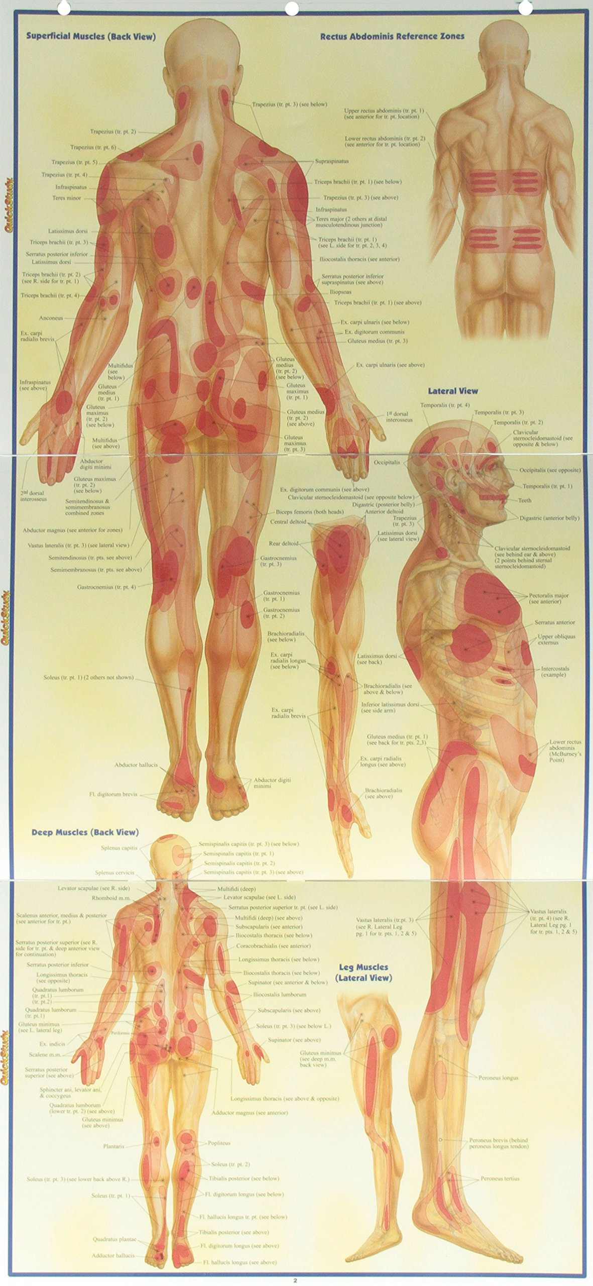Trigger Points (Quick Study Academic): Inc. BarCharts: 9781423203162 ...