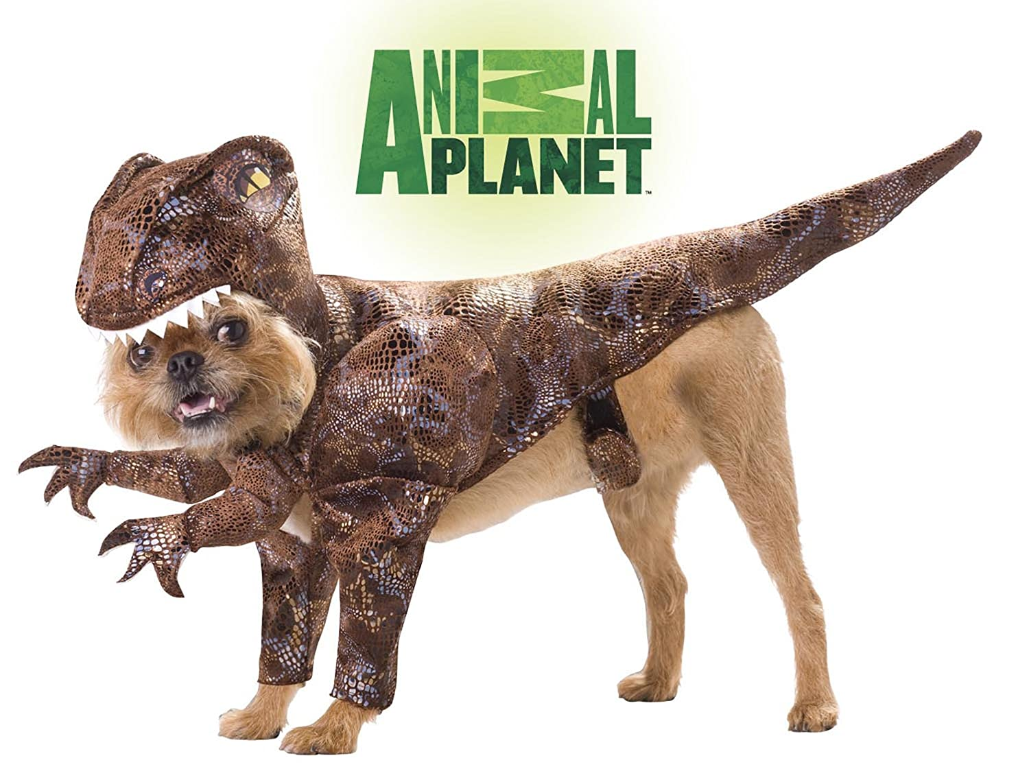 Dog Halloween Costumes  - Raptor Dinosaur
