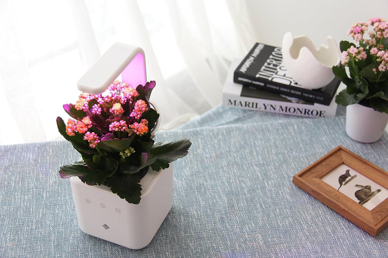 Amazon.com : sPlant Indoor Garden Kit, Self Watering Herb Planter ...