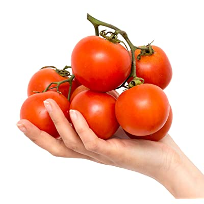 Jet Star Hybrid Tomato Seeds : Garden & Outdoor