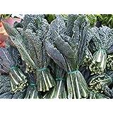 Gardener's Christmas Gift- Kale Seed Assortment- Red Kale (300 Seeds), Black Kale (200), and Siberian Kale (500)