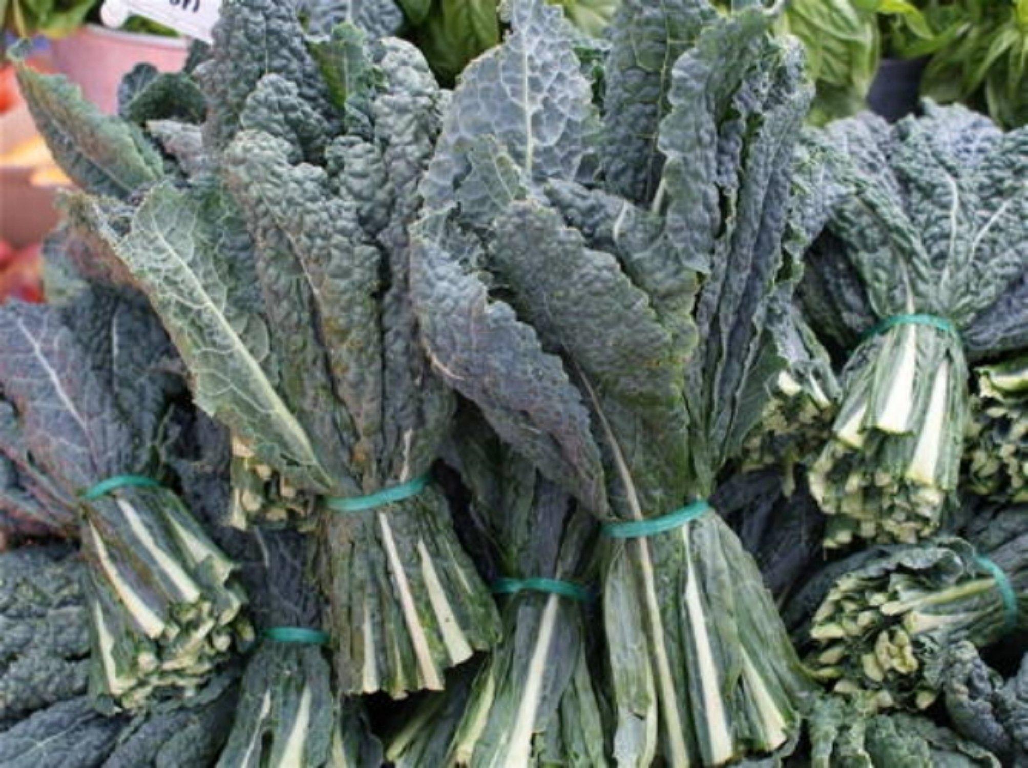 Kale Seeds- Assortment- 5 Varieties- Red Kale (500 Seeds), Black (400), Siberian (500), Dwarf Vates (500), Premier (500)