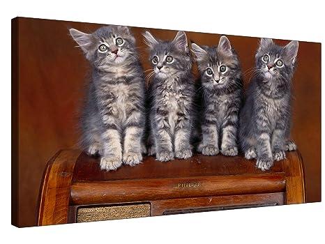 Quattro gatti su cornice in legno sgabello varie taglie xl
