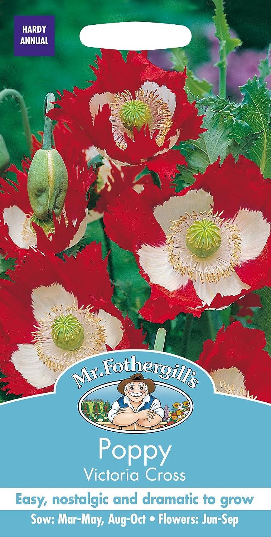 Mr Fothergills 10032 Victoria Cross Poppy Flower Seeds Amazon