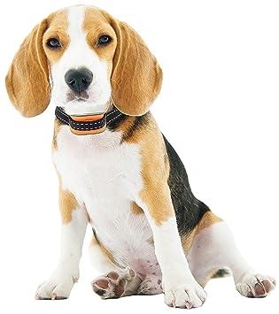 VINE RITUALS Collares para Perros de tamaño pequeño a Mediano con Sensor automático, diseño de