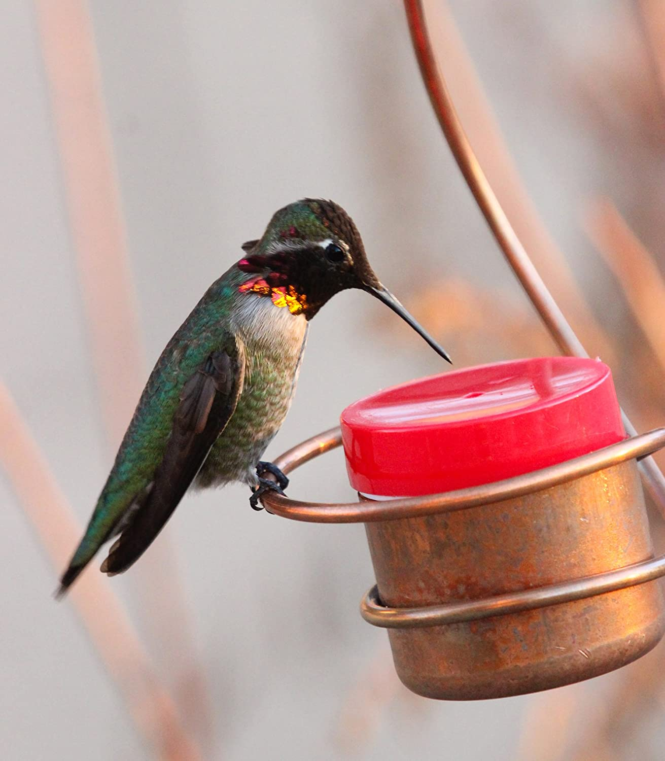 ways to feeder a gallon one step wikihow clean hummingbird version