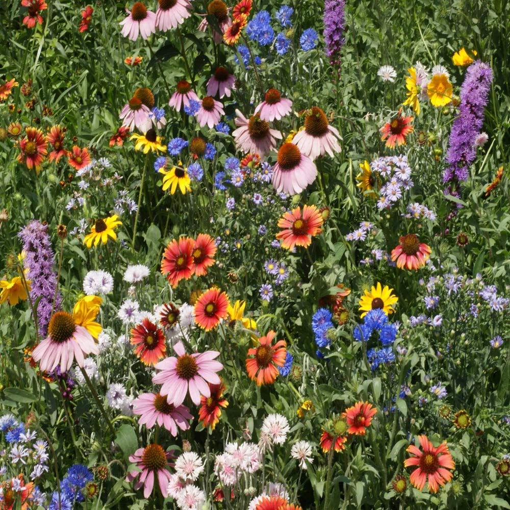 Outsidepride Northeast Wildflower Seed Mix - 5 LB by Outsidepride (Image #1)