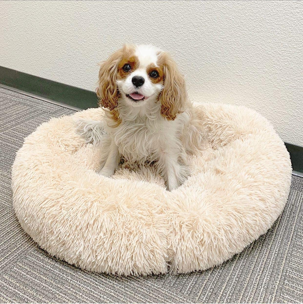 Alpha Paw Cozy Calming Bed for Dogs, Anti Anxiety, Ultra Soft, Washable